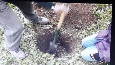 Photo of Ivan je počeo da kopa rupu u svom dvorištu i pronašao nešto Izvanredno