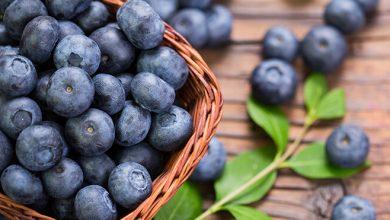 Photo of 8 iznenađujuće prednosti borovnice za vašu kožu